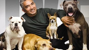 Click to view details and reviews for Cesar Millan.