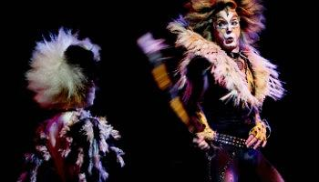 Click to view details and reviews for Cats Oslo.